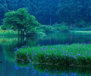 flowers, japan, and lake image
