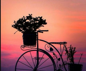 flowers, sunset, and bicycle image