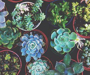 plants are friends image
