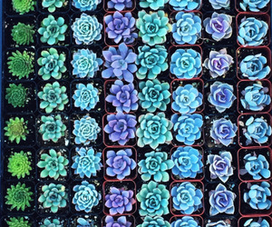 plants, flowers, and blue image