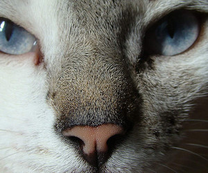 azul, blue, and cat image