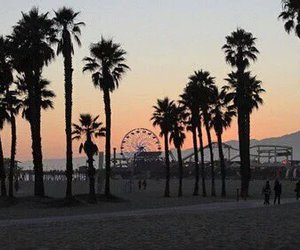 sunset, beach, and palm trees image