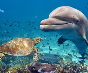 dolphin, turtle, and ocean image