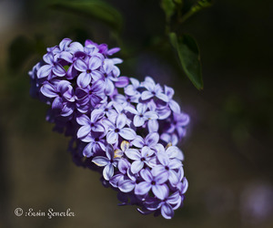 flowers, spring, and spring flowers image