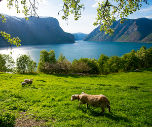 beautiful, fjord, and landscape image