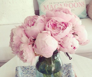 colors, peonies, and decor image