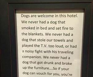 hotel, dog, and funny image
