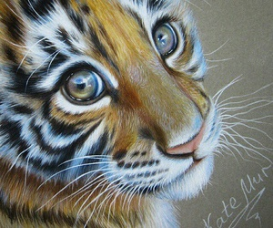 art, tiger, and draw image
