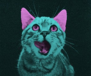 cat and trippy image