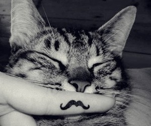 cat, mustache, and moustache image