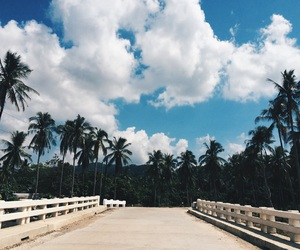 palm trees, road, and Road Trip image