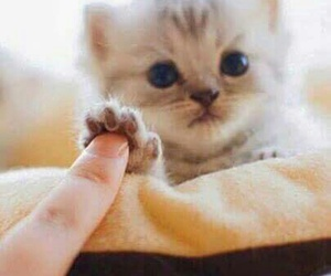 animal, aww, and sweet image