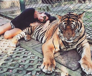 amazing, lovely, and tiger image