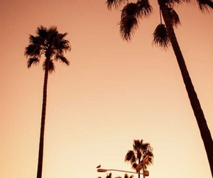 aesthetic, photography, and cali image