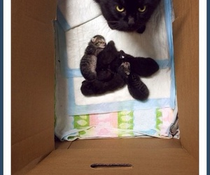 cat, kittens, and fluffy jellybeans image
