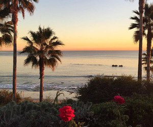 sunset, beach, and flowers image