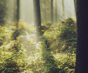 autumn, bokeh, and light image