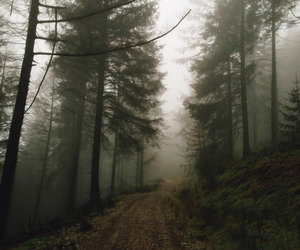 beauty, fog, and forest image