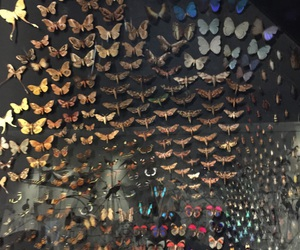 art, butterfly, and papillons image