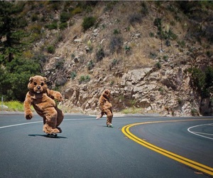skate, bear, and skateboard image