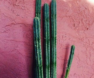 authentic, cactus, and simple image