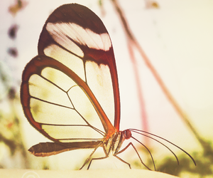 butterfly, colors, and graceful image