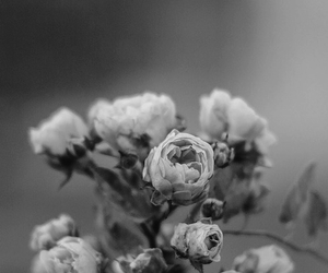 black white and flowers image