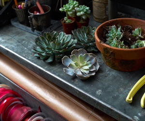 nature, plant, and succulent image
