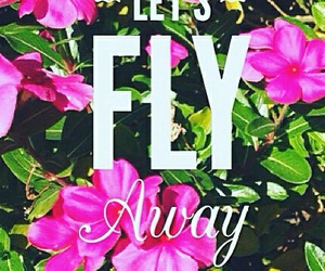 away, fly, and pink image