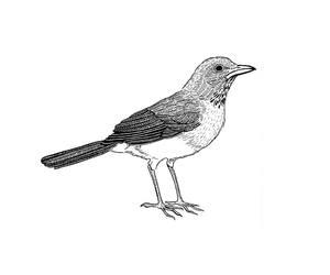 bird, illustration, and voar image