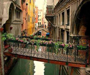 beautiful, plants, and venice image
