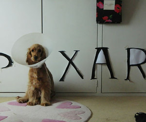 dog, pixar, and disney image