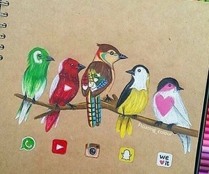 bird, instagram, and youtube image