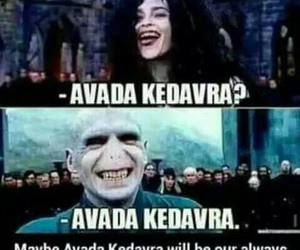 laugh, funny, and harry potter image