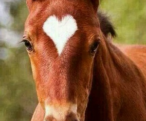horse, heart, and animal image