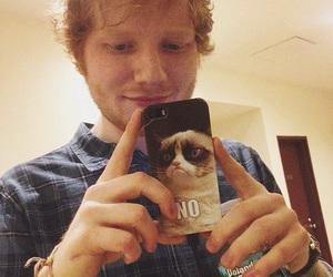 ed sheeran, ed, and grumpy cat image