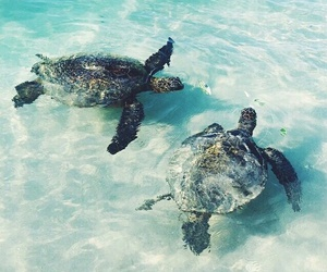 turtles and lové image