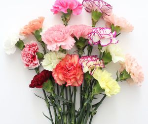 carnations, floral, and flowers image