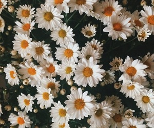flowers, flores, and white image