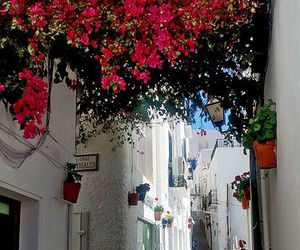almeria, street, and flowers image