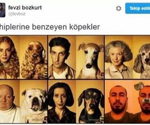 komik, köpek, and sözler image