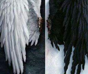 angel, white, and black image