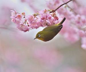 bird, bloom, and blossom image