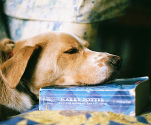 dog, book, and harry potter image