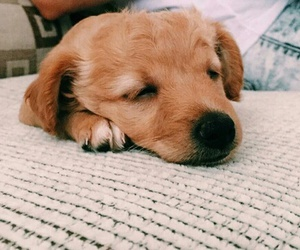 adorable, puppy, and aww image