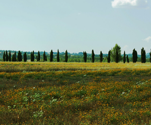 beautiful, countryside, and cypress image