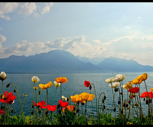 flowers, lake, and vyer image