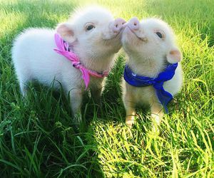animals, piglet, and piglets image