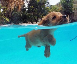 dog, puppy, and swimpool image