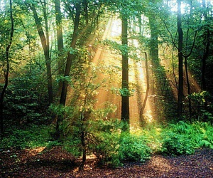 green, tree, and bosque image